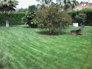 giardinaggio a taranto